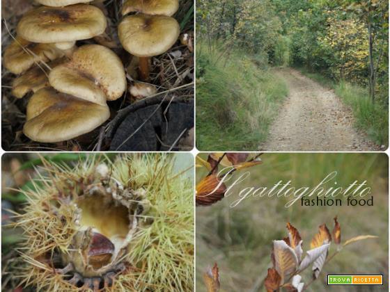Il bosco di ottobre...tutte le sfumature dell'autunno