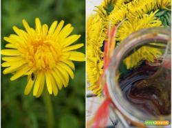 Nettare di fiori di tarassaco