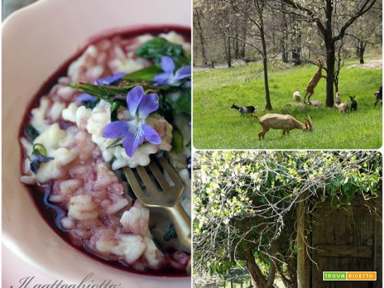 Dai prati: Risotto mantecato al seirass con silene, fiori di campo e riduzione di vino rosso