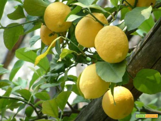 Granita limone siciliana zucchero acqua limone