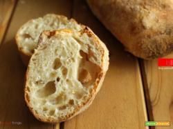 Pane senza impasto (no knead bread)