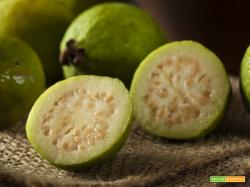 Il Guava possiede molta vitamina A e ed un quantitativo di vitamina C circa 8 volte maggiore rispetto all'arancia