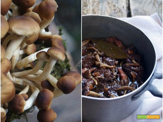 Spezzatino di manzo con pioppini e lambrusco