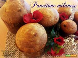 Panettone Massari: Milano alto