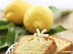 Poppy Seeds Citrus Cake