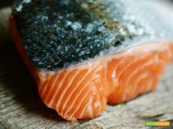 Come marinare a secco il trancio di salmone