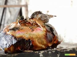 Cipolle al forno, il contorno che sta su tutto