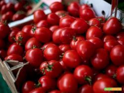Come conservare i pomodorini