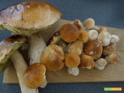 Come preparare i funghi porcini fritti: Ricetta semplice e veloce