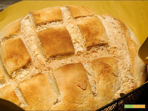 Pane bianco con Nutrifree e con pasta madre