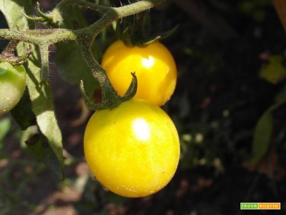 I pomodorini gialli: le loro caratteristiche e come usarli in cucina