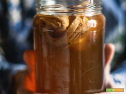 Kombucha: cos'è, benefici e ricetta per preparare in casa il tè fermentato